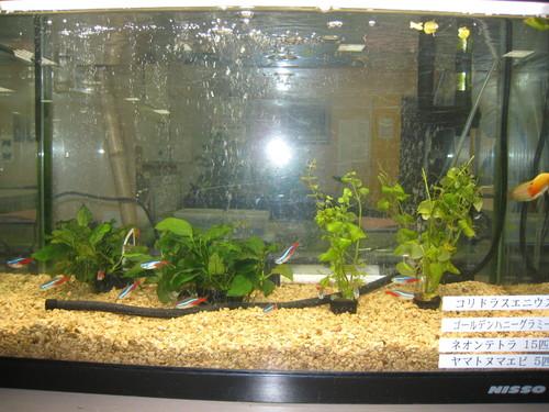 熱帯魚1のサムネール画像