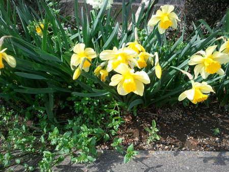 春.jpg